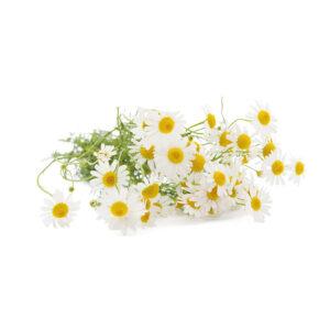 infuisi alle erbe camomilla sandemetrio