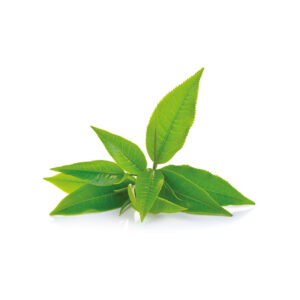 te verde in filtro sandemetrio 1